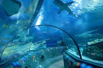Giornata Mondiale degli Oceani al Gardaland Sea Life
