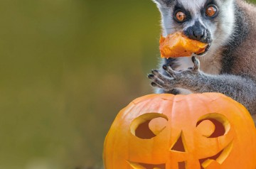 Speciale Halloween al Parco Natura Viva