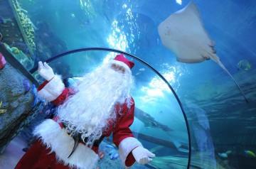 Babbo Natale a Gardaland Sea Life