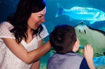 Festa della Mamma a Gardaland Sea Life Aquarium
