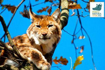 Keeper per un giorno - gatti selvatici e linci