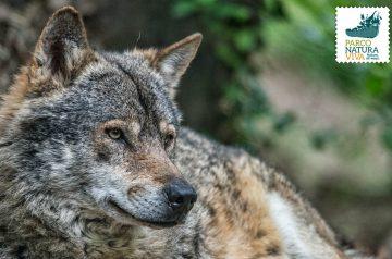 Keeper per un giorno - i lupi