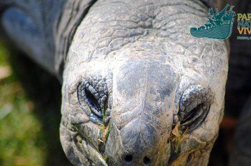 Keeper per un giorno: testuggini delle Seychelles
