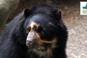 Keeper per un giorno - orsi dagli occhiali e coati