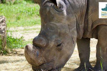 World Rhino Day e Keeper per un giorno
