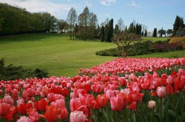 Tulipanomania al Parco Giardino Sigurtà