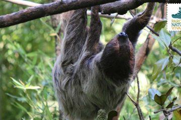 Keeper per un giorno - bradipi