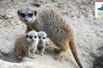 Keeper per un giorno - suricati e cercopitechi