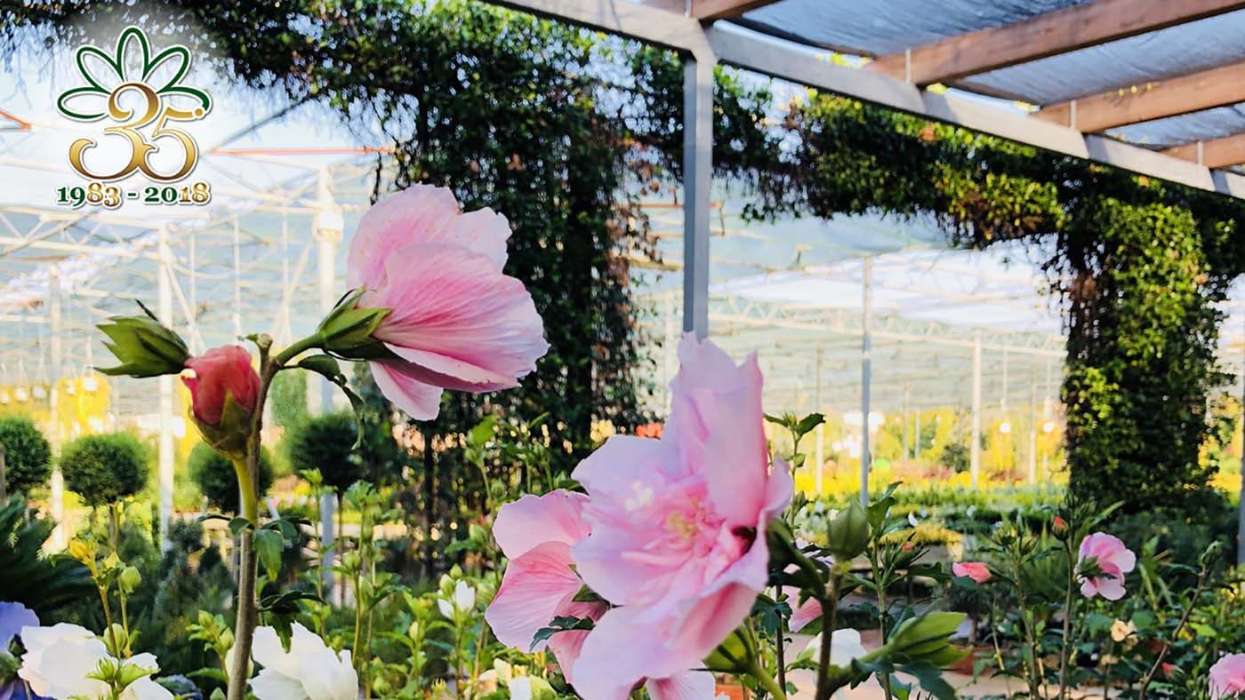 Fiori Quaiato.Floricoltura Quaiato Tutti I Colori Dell Autunno Carnet Verona