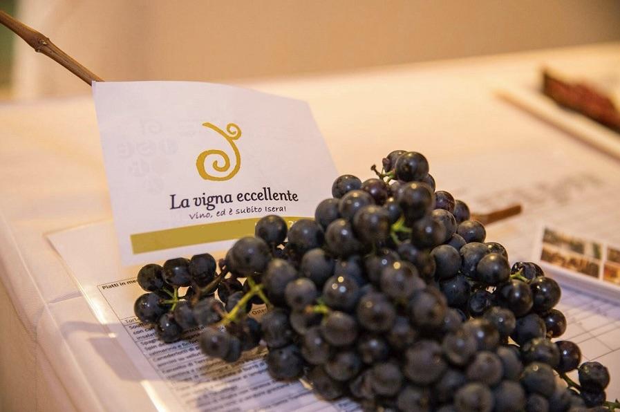 la-vigna-eccellente-foto-Florio-Badocchi-03