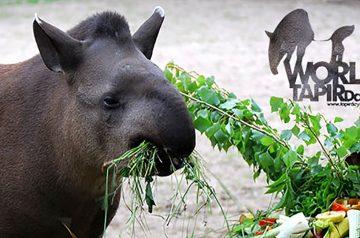 World Tapir Day al Parco Natura Viva