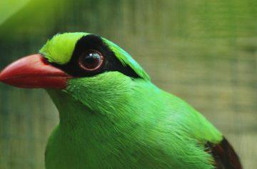 Silent Forest al Parco Natura Viva