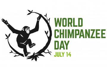 Giornata Mondiale dello Scimpanzé al Parco Natura Viva