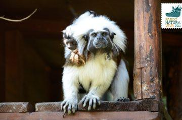 Piccole scimmie al Parco Natura Viva