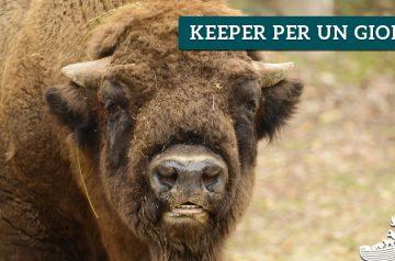 Keeper per un giorno - bisonti