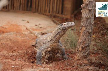 Keeper per un giorno - draghi di Komodo e testuggini