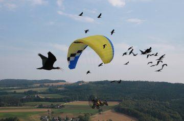 Parco Natura Viva: alviamo gli ibis
